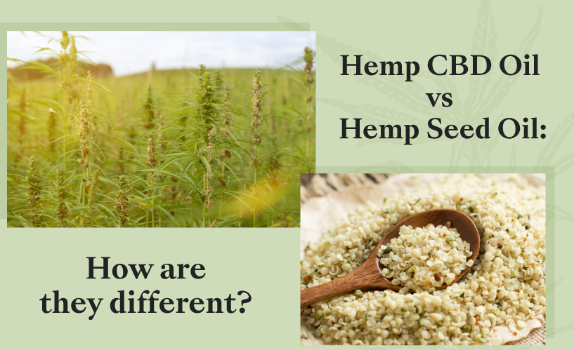 Hemp CBD Oil vs Hemp Seed Oil: How Are They Different?