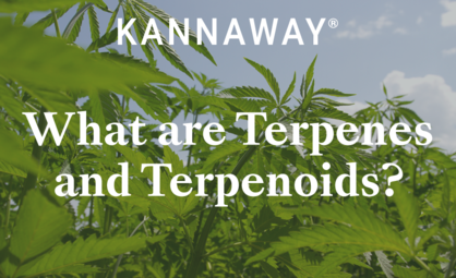 What are Terpenes and Terpenoids?