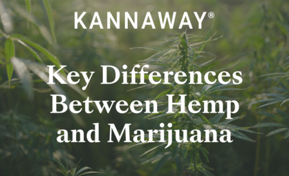 The Key Differences Between Hemp and Marijuana